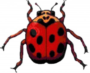 1050422081_Picture_ladybug