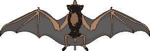 1234713308_Picture_bat