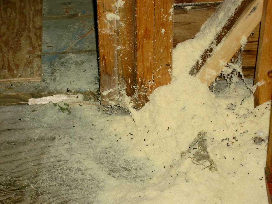 Carpenter Ants Damage